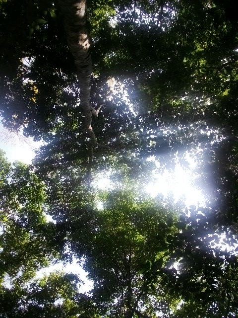 My view while lying in the forest floor