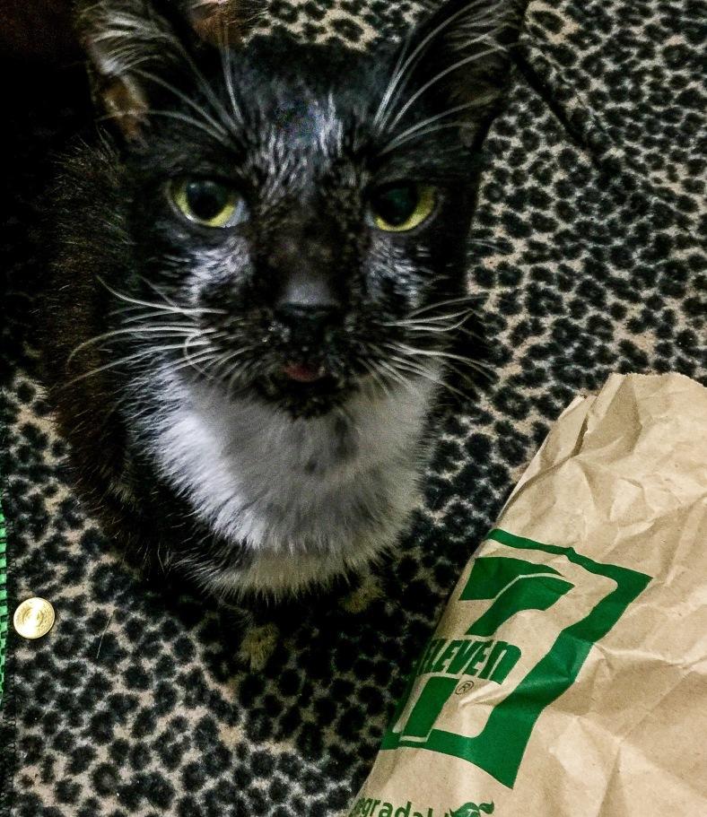 Cat Ate Spoiled Wet Food